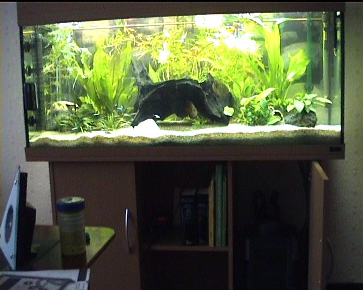 Test de l aquarium rio 240 de juwel for Pompe externe aquarium