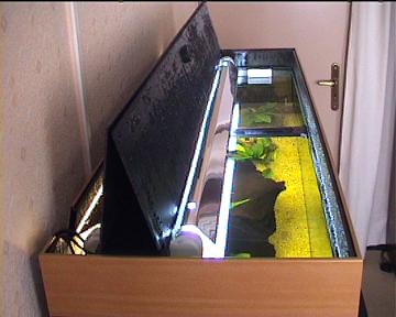 choisir son aquarium. Black Bedroom Furniture Sets. Home Design Ideas
